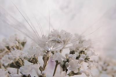 Photograph - Heavens Tear by Barbara St Jean