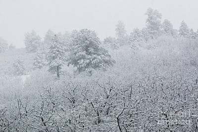 Photograph - Heavy Snow In The Pike National Forest Of Colorado by Steve Krull