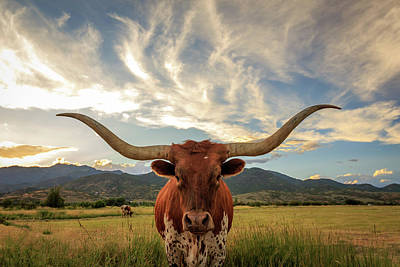 Animals Photos - Heber Longhorn Sunset by Johnny Adolphson