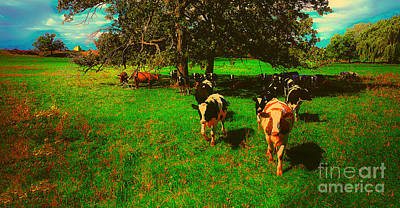 Photograph - Hebron Il Cows Pasture by Tom Jelen