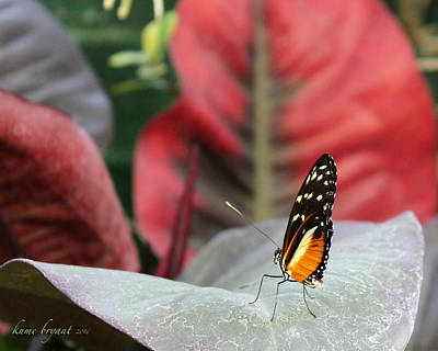 Photograph - Hecale Longwing Butterfly by Kume Bryant