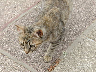 Photograph - Hecht Museum Cat by Donna L Munro