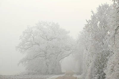 Photograph - Hedge And Oak Trees In Hoar Frost Winter Landscape by Martin Stankewitz