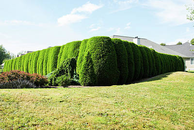 Photograph - Hedge Perspective by Tom Cochran
