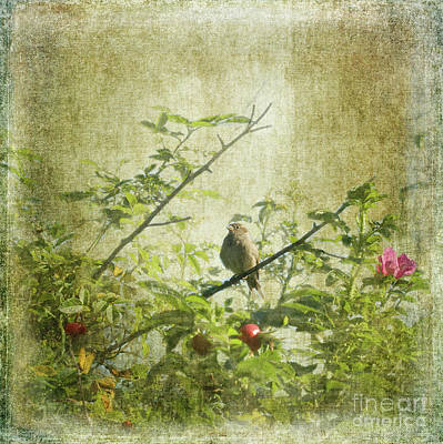 Photograph - Hedge Sparrow by Liz Alderdice