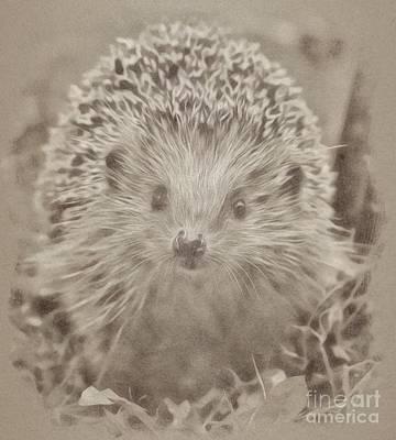 Animals Drawings - Hedgehog by Esoterica Art Agency
