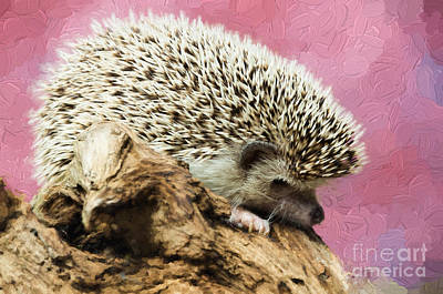 Photograph - Hedgehog by Les Palenik