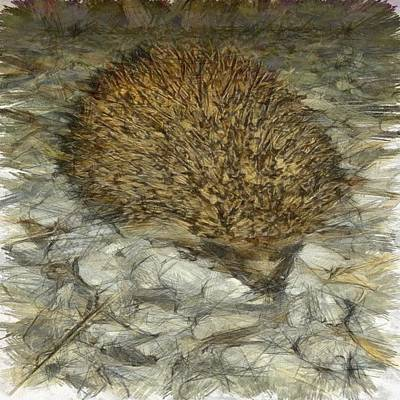 Painting - Hedgehog by Tracey Harrington-Simpson