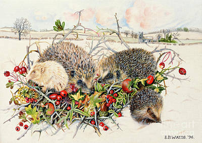 Hedgehog Wall Art - Painting - Hedgehogs In Hedgerow Basket by EB Watts