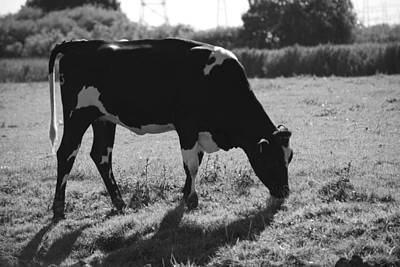 Photograph - Heifer Defined by Eric Tressler