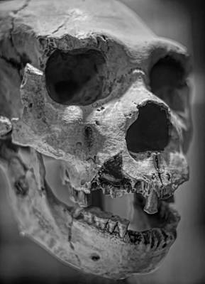 Photograph - Heidelbergensis by Heather Applegate