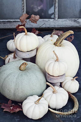 Photograph - Heirloom Pumpkins And Antlers by Stephanie Frey