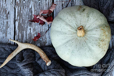 Photograph - Heirloom Pumpkins Winter Scarf And Antlers by Stephanie Frey