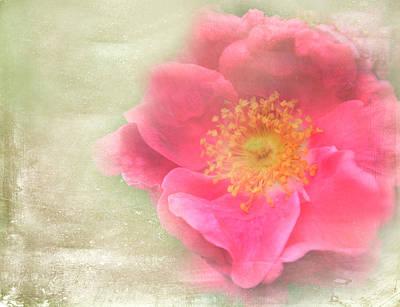 Heirloom Rose Art Print by Catherine Alfidi