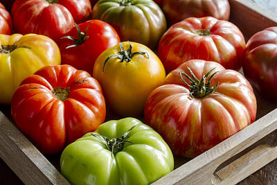 Photograph - Heirloom Tomato Harvest by Teri Virbickis