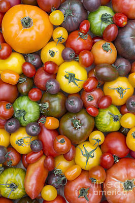 Heirloom Tomatoes Pattern Art Print by Tim Gainey
