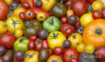 Solanum Lycopersicum Photograph - Heirloom Tomatoes by Tim Gainey