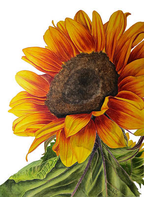 Wall Art - Painting - Sunflower by Kristina Spitzner