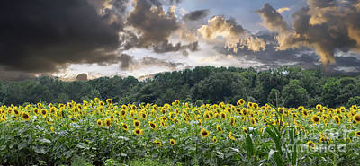 Photograph - Helianthus by Dale Powell