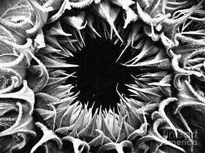 Photograph - Helianthus Monochrome by Sarah Loft