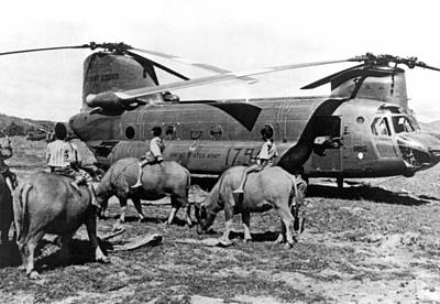 Chinook Photograph - Helicopters And Water Buffalos by Underwood Archives
