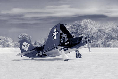 Photograph - Helldiver Profile Duo Tone by Liza Eckardt