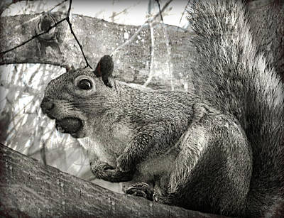Photograph - Pesky Squirrel by Fine Art By Andrew David