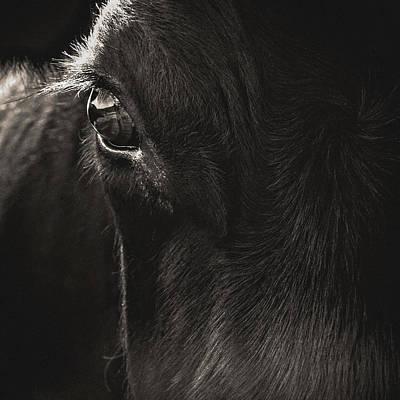 White Cattle Photograph - Hello by Debi Bishop