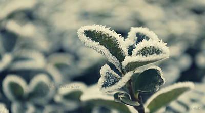 Photograph - Hello December by Marija Djedovic
