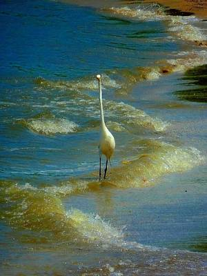 Photograph - Hello Heron by Beth Akerman