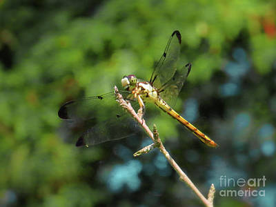Dragonfly Wings Photograph - Hello It's Me by Scott Cameron