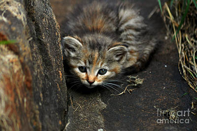 Photograph - Hello Little Kitty by Eric Liller