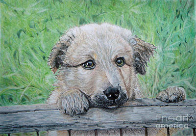 Drawing - Hello Puppy by Yvonne Johnstone