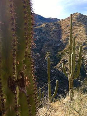 Photograph - Hello Saguaros by Heidi Moss