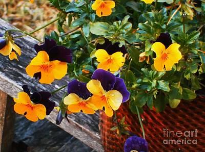 Photograph - Hello Spring by Donna Dixon