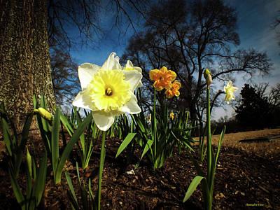 Photograph - Hello Spring by Hannah Underhill