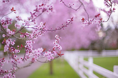 Photograph - Hello Spring by Kunal Mehra