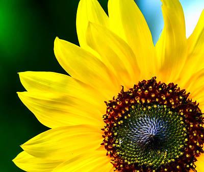 Sunflower Photograph - Sunflower - Hello Sunshine by Black Brook Photography