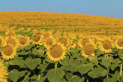 Photograph - Hello Sunshine by Deb Buchanan