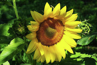 Photograph - Hello Sunshine by Judy Wanamaker