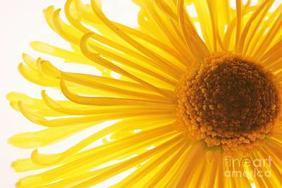 Photograph - Hello Sunshine by Julie Lueders