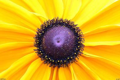 Photograph - Hello Sunshine by Lisa Wooten