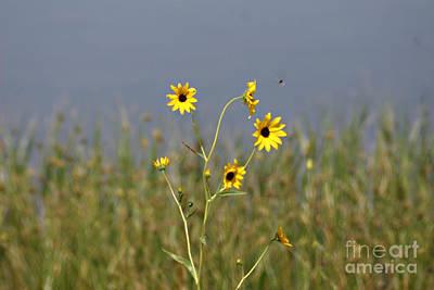 Photograph - Hello Sunshine by Shawn Naranjo