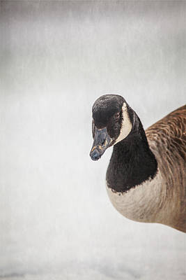 Geese Photograph - Hello There by Karol Livote
