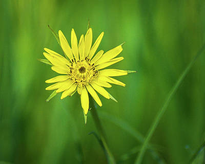 Photograph - Hello Wild Yellow by Bill Pevlor