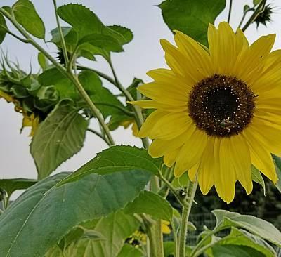 Photograph - Hello Yellow by Amanda Smith