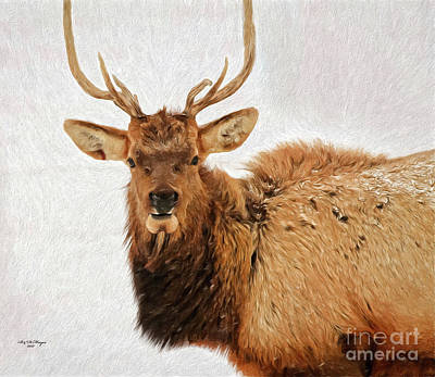 Yellowstone Mixed Media - Hello You  by Bill And Deb Hayes