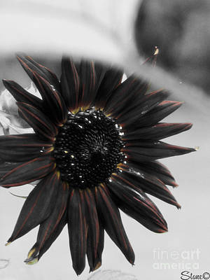 Photograph - Hells Sunflower by September  Stone