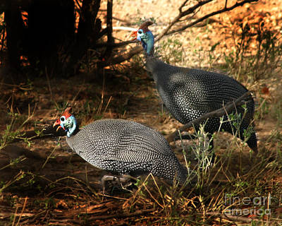 Photograph - Helmeted Guinefowl South Africa by Joseph G Holland