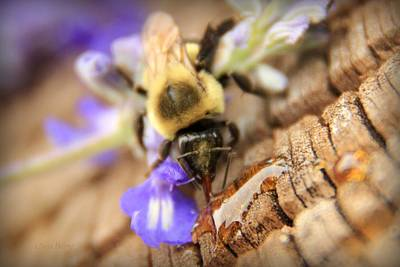 Photograph - Helping Honey by Chris Berry